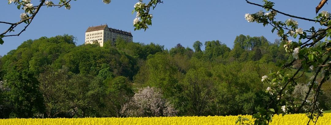 Schloss Heiligenberg mit Raps