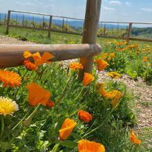 Blumenkomposition vor einer Schutzhütte