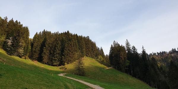 Aufstieg zur Alp Trachselegg