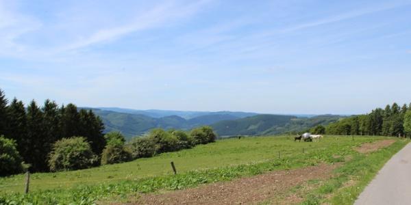 Wanderweg Wildewiese