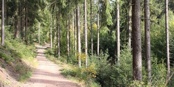 Pionierweg zum Christelgrund zwischen Thalheim und Zwönitz