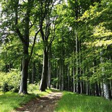 Zöld erdőben jártam..