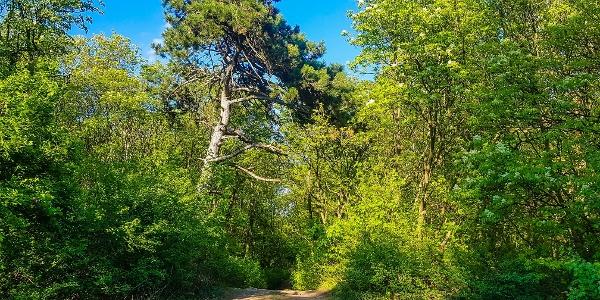 Biai erdő