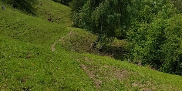 Trail von Tschiertschen nach Praden
