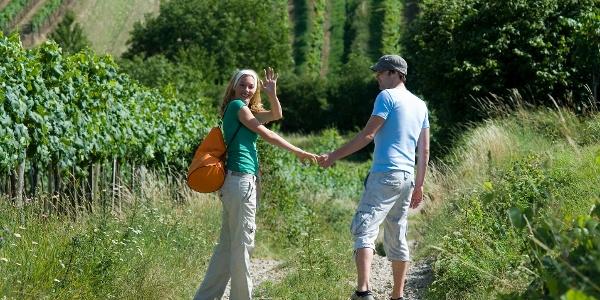 Durch die Weinviertler Weingärten wandern