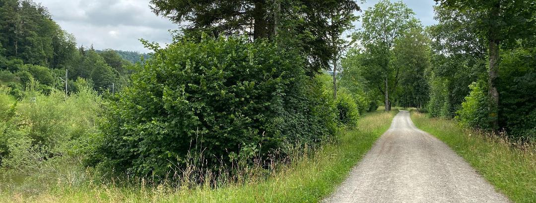 Wanderweg entlang der Töss