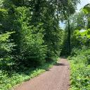 über breite Waldwege
