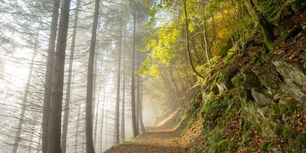 Waldweg hin zur Talsperre