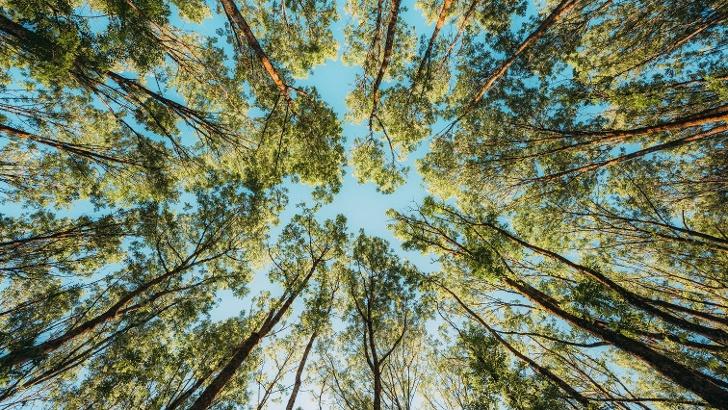 Baumkronen im Winter- und Weierbachtal