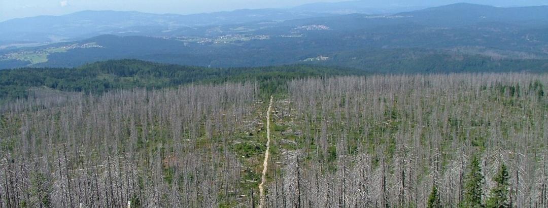 """Blick vom Gipfel des Lusen auf den Aufstieg """"Sommerweg"""" im (Süd-)Westen"""