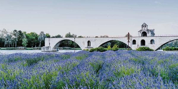 Pond d'Avignon