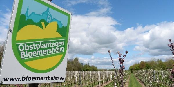 Obstplantagen Bloemersheim