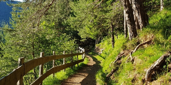La passeggiata dei pini