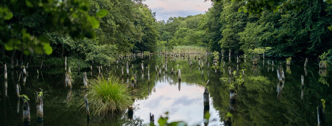 A bakonyi Gyilkos-tó (Hubertlaki-tó) alkonyatkor