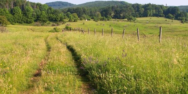 A Nagy-mező töbröktől hullámos réjte (a kerítés mögött a fokozottan védett rész)