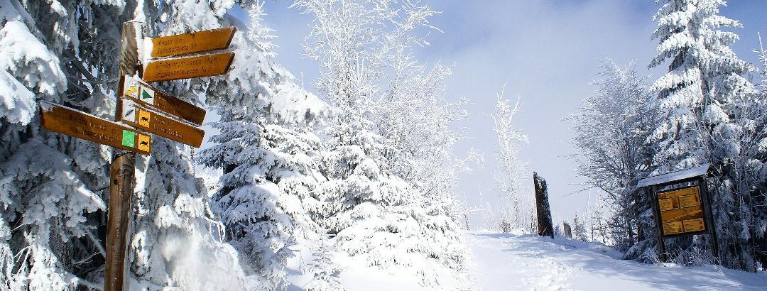 Bavarian Forest National Park in winter