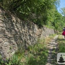 In Vino Veritas - Schattiger Weg an Trockenmauern