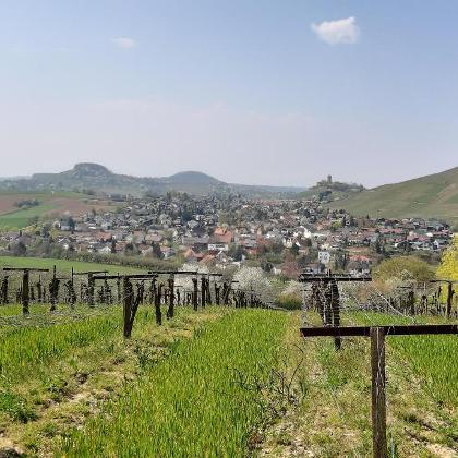 Blick zur Burg Beilstein