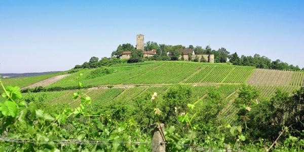 Die Burg Ravensburg umgeben von einer wunderschönen Rebenlandschaft