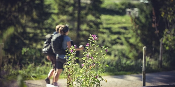Bettlersteig Wandern Kaindl Naturerlebnis Kaisergebirge