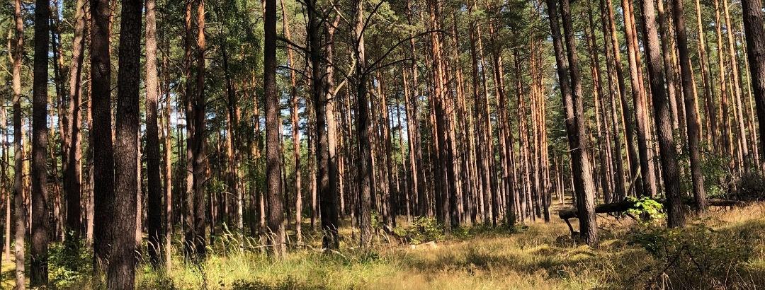 Auf einsamen Pfaden im Müritz Nationalpark