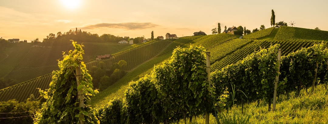 Weinberge der Südsteiermark
