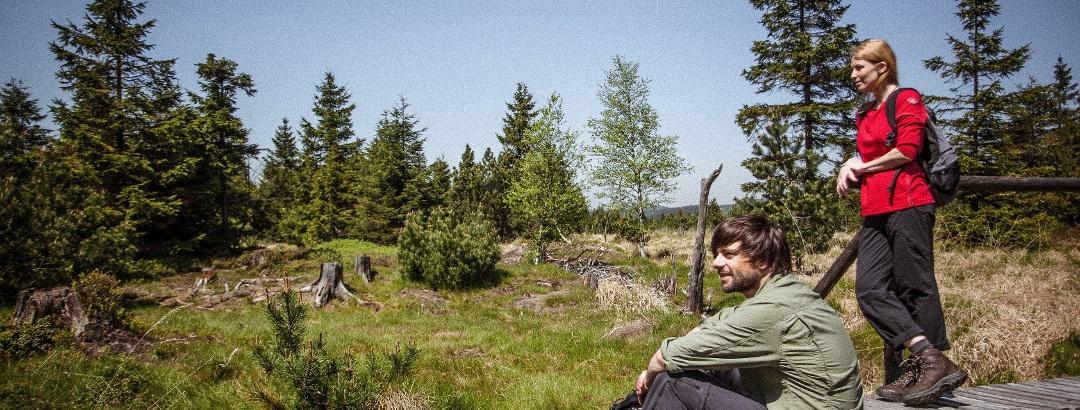 Wandern in der Urlaubsregion Altenberg im Erzgebirge - Georgenfelder Hochmoor