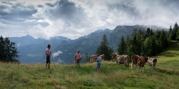 Alpe Seefluh