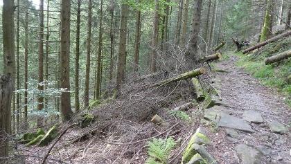 Der Wald wird sich selbst überlassen. Nur die Wege werden freigelegt.