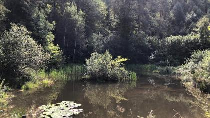 Seerosenteich im Wald hinter dem Montiggler See