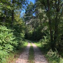 Waldweg, diesmal fast eben!