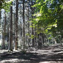Hier lässt sich der Wald genießen