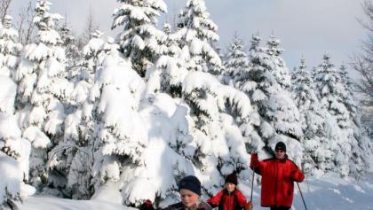 Auf der schneesicheren Schwartenbergloipe