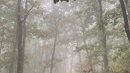 Sarga jelzes szeptember vegen