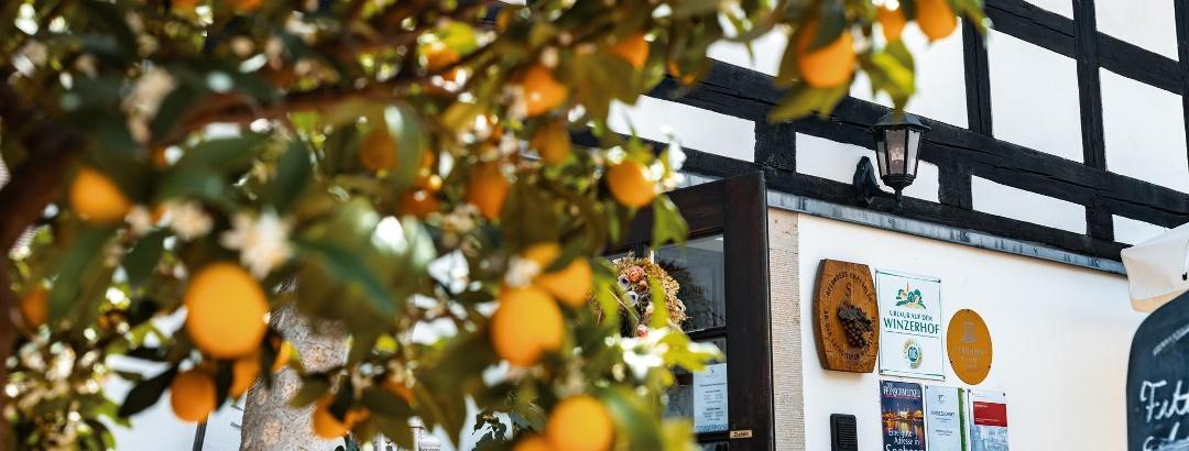 Eingang Restaurant & Pension