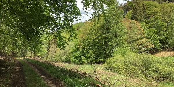 Klafterbachwiese