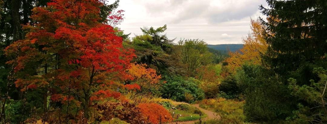 Botanischer Garten in Schellerhau im Herbst