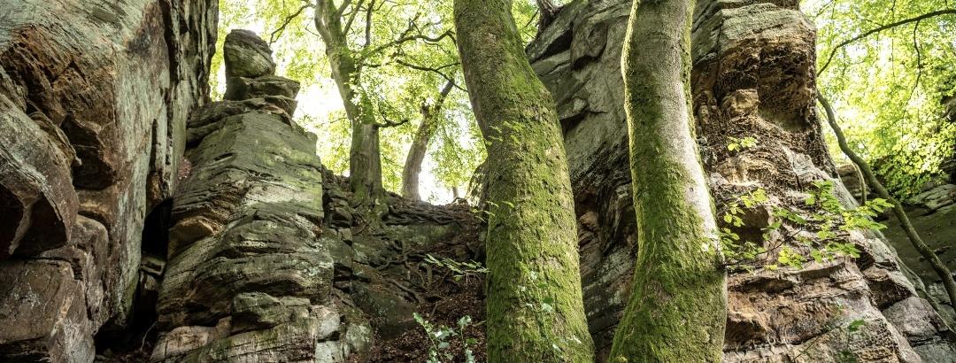 Felsen bei der Mandrack Passage im NaturWanderPark delux, © Eifel Tourismus GmbH, D. Ketz