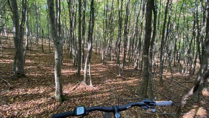 Potecă pentru MTB prin pădure