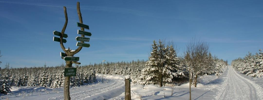 Wintersport in der Urlaubsregion Altenberg - Langlaufloipen
