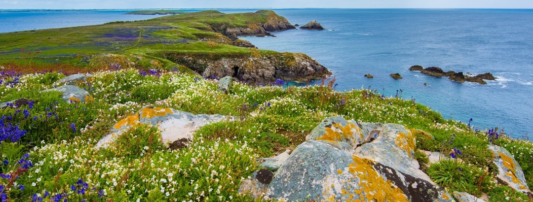 Saltee Island Great, Irland