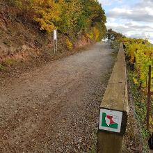 Fränkischer Rotweinwanderweg bei Erlenbach