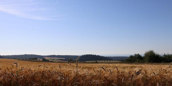 Fernsicht über die Felder bei Kürrenberg
