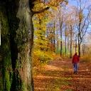 Image de profil de Tourismus VG Lauterecken-Wolfstein