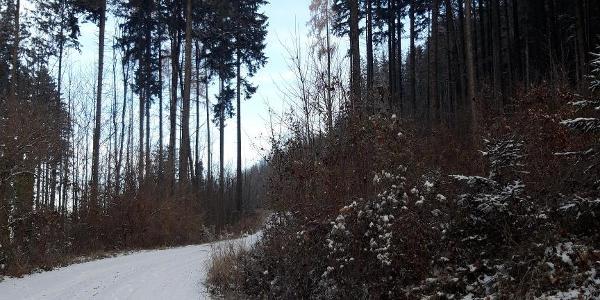 Von Beginn an bleiben wir auf der Forststraße - diese verläuft dann bis fast zum Gipfel