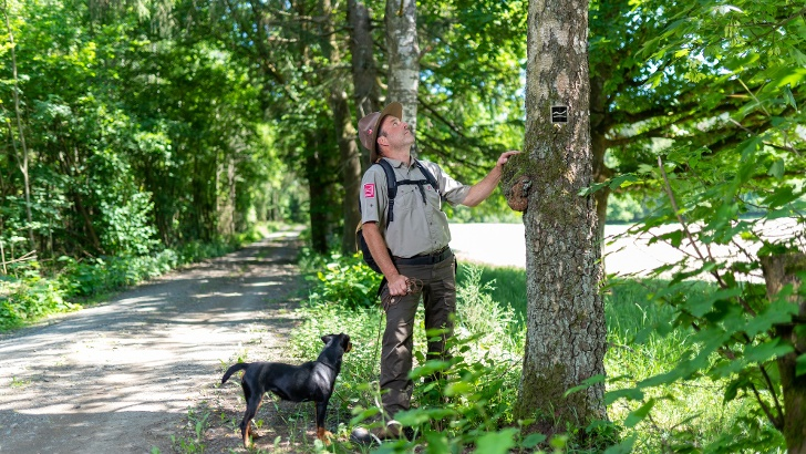 Ranger betrachtet einen Baum