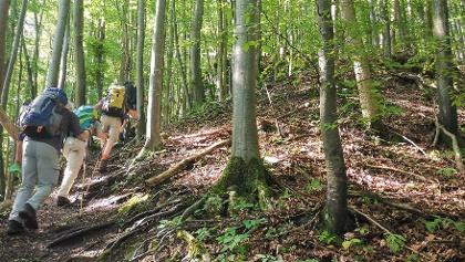 Waldaufstieg nach Flintsbach