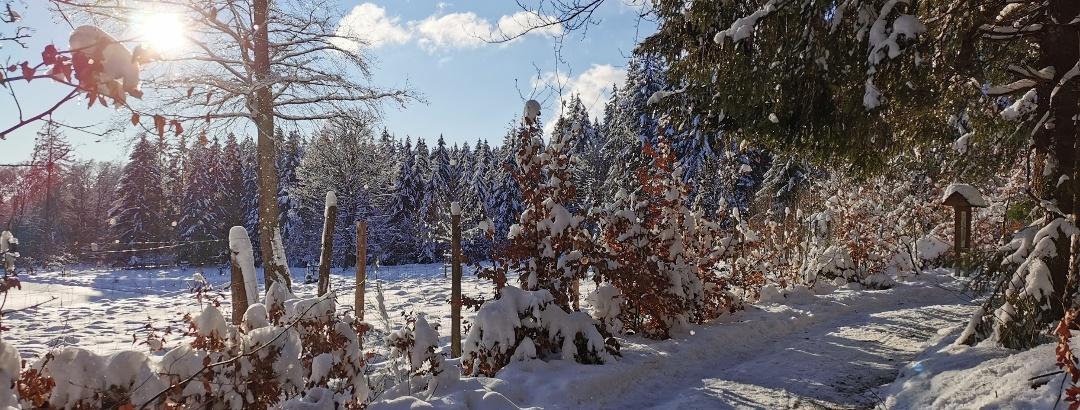 Winterlandschaft am Wildpark