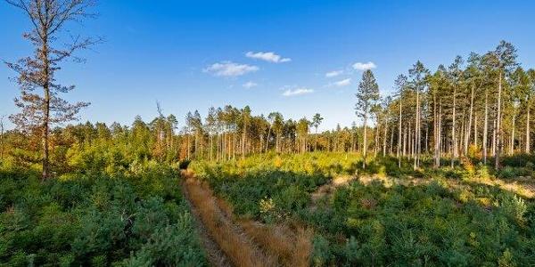 Wingst offener Wald