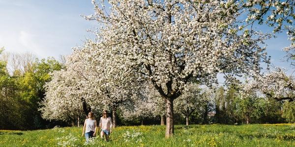 Blüten-Wanderung mit Blüten-Sepp rund um Egnach